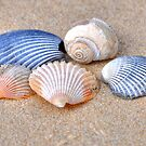 Sea Shells by the Sea Shore by Monte Morton