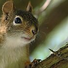 Curious Squirrel by Debbie Oppermann
