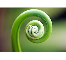 Spirals - fern frond Photographic Print