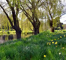 Daffodils in the Meadow by Michelle Golden