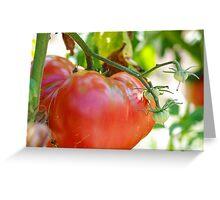 In my garden: big tomato Greeting Card