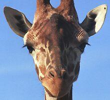 Giraffe  by dangerouslyclos