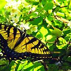 Golden Wings by AriannaRenee