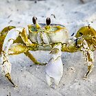 Sand Crab by Mikell Herrick