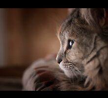 Cleopatra, my female siberian cat by Giuseppe Esposito