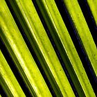 Palm Leaf. by Mike Mayo
