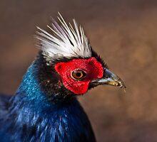 Vietnamese Pheasant by vivsworld