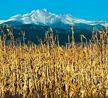 Winter Corn Fields and Longs Peak by Gregory J Summers