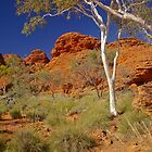 Kings Canyon, Watarrka National Park, Northern Territory by fotosic