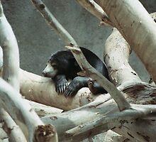 Sleepy Bear by Jonathan  Green