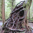 Exposed roots by Michelle Brandt