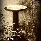 Bird Bath by kchase