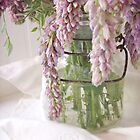 Fresh Wisteria by thesweetestdays