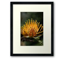 Reaching Up Framed Print