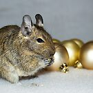 Degu Baubles by Lisa Marie Robinson