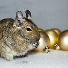 Degu Baubles by lmaiphotography