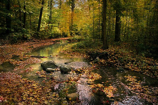 The Brook in the Woods by Robin Webster