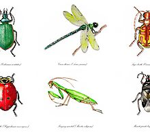 Garden Insects-The GOOD ones! by Tristan Berlund