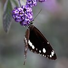 Hunter Valley Butterfly ~ 2 by Emma  Wertheim~Blue Butterfly Art