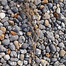 Beach Pebbles by Ludwig Wagner