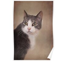 Pretty Kitty ~ Poster