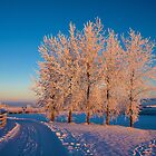 Frozen Poplar Trees I, Northern Ireland by Ludwig Wagner