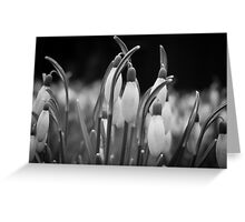 New beginnings and hope Greeting Card