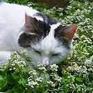 Asleep in the Alyssum! by heatherfriedman