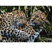 games cats play Photographic Print