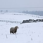 Wintery Pennines by Stephanie Owen