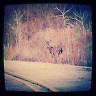 Deer by leapdaybride