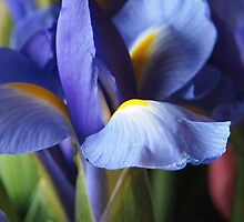 Just Iris by Linda  Makiej