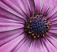 A Purple Mood by yolanda