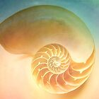 Shell by Anne Seltmann