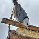 Nuthatch And Wooden Feeder by Diana Graves Photography