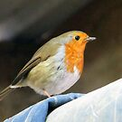 Robin  by Caroline Anderson