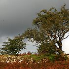  Trees and Stormy Skies  by DIANE  FIFIELD