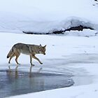 On Thin Ice by Chris Snyder