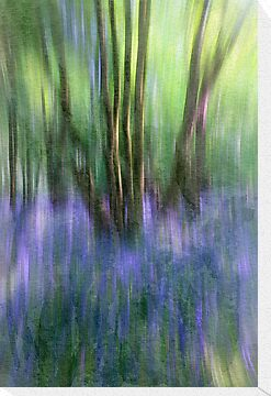 Essence Of Bluebells by Patricia Jacobs CPAGB LRPS BPE2