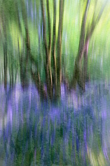 Essence Of Bluebells by Patricia Jacobs CPAGB LRPS BPE3
