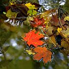 Reflection of Fall by Heather  Andrews Kosinski