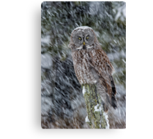 Lost in the Snow Canvas Print