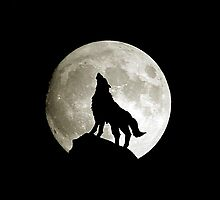 Wolf IPad Case by Saratoubi
