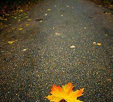 Autumn Leaf,Bury St Edmunds by Suffolk Photography