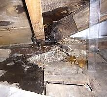 roof leak tips by addieturner62