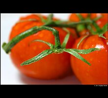 Solanum Lycopersicum - Organic Red Tomato Vine Detail by © Sophie W. Smith