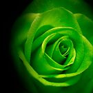 green rose by lensbaby
