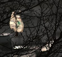 The Plastic bag wanted to be a Bird.......... by Clo Sed