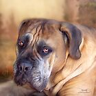 Mastiff Portrait by Carol  Cavalaris