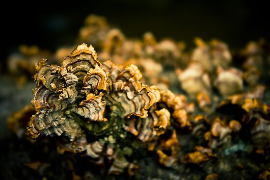 Fungal Gold  by bcboscia410